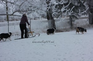 homesteadsledding